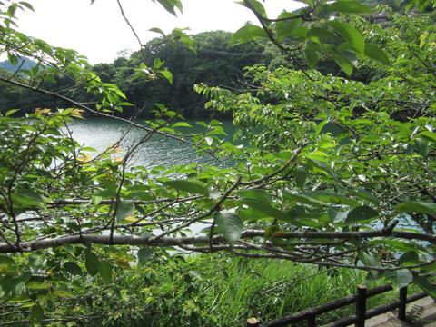 道の駅もみじ川温泉の風景2